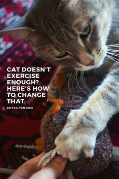 Cat Exercise, Hiding Spots, Pet Care Tips, All About Cats, Cat Facts, What Is Life About, Cat Life, Cat Toys, Training Tips