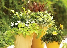 Container garden in yellow with beautiful flowers to match! Yellow is the new turquoise.