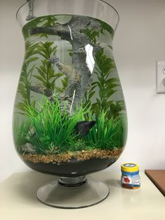 Large Betta vase More