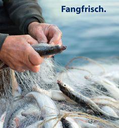 """Fische """"Fangfrisch"""", geliefert von Gastrofresh, Bozen - Südtirol"""