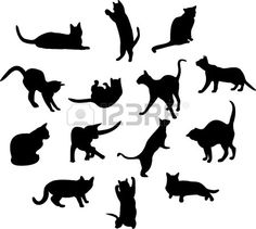 Cats  (TAG: CC=CREATIVE COMMONS (FREE DOWNLOAD); COMMERCIAL LICENSING AVAILABLE)