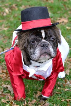 Lakewood's 7th Annual Spooky Pooch Parade Slated for Oct. 18. Details here: http://www.lakewoodcitizen.com/lakewoods-7th-annual-spooky-pooch-parade-slated-oct-18/