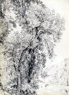 Constable, Study of Ash Tree, Londres, VAM