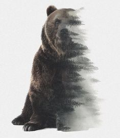 Медведь арт