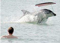 Dolphin takes bodyboard. Not furry, but very funny.