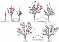 Garden Trees, Trees To Plant, Farm Gardens, Outdoor Gardens, Small Fruit Trees, Bonsai Pruning, Summer House Garden, Rose Trees, Recycled Garden