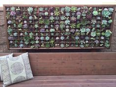 "Wow!!! Gorgeous succulent wall made with our potted 2"" are $1.45, 2.5"" are $2.50, and potted 4"" are $2.80, we can do any combos. TheSucculentSource"
