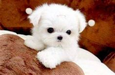 Cutest Puppies On Internet : theBERRY