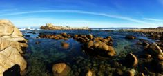 A great day to explore the tide pools along the #Monterey coastline.