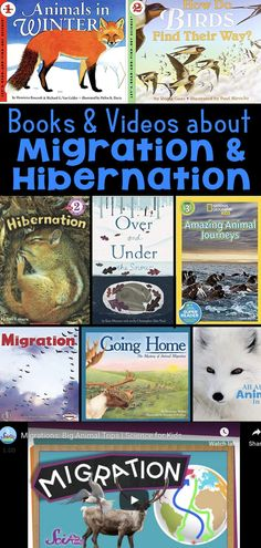 What Animals Do in Winter – Books and Videos about Migration and Hibernation - Bildung Science Lessons, Teaching Science, Science For Kids, Science Activities, Children Activities, Ecosystem Activities, Winter Activities, Winter Girl, Animal Adaptations