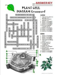 Diagrams that changed city planning by aaron britt pinterest diagram plant cell crossword with diagram editable ccuart Gallery