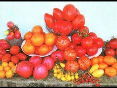 Семена томатов ( помидор )по видам, ТЕРМИНАНТности, цвету