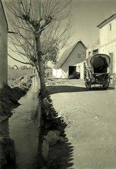 Camino de Pinedo 1945. Esteban Llavero Moreno. Valencia en blanco y negro