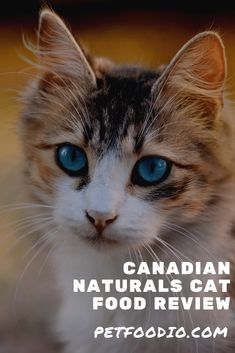 Healthy Cat Food, Cat Food Brands, Cat Grooming, Domestic Cat, Natural Flavors, Worms, Need To Know, Cat Lovers, Cats