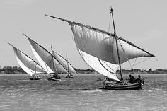 Traditional regatta of Maltese boats with a lateen sail