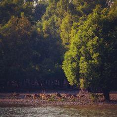 Harbaria, Sundarban, Bangladesh.
