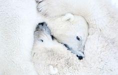 Dame un abrazo de oso!!!