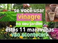 SE VOCÊ USAR VINAGRE NO SEU JARDIM, ESSAS 11 MARAVILHAS VÃO ACONTECER EM 3 DIAS! - YouTube