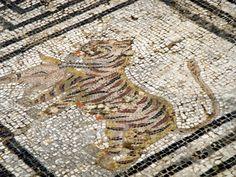 Ancient Rome, Ancient Art, Mosaic Art, Mosaic Tiles, Volubilis, Site Archéologique, Roman Architecture, Morocco Travel, Class Room