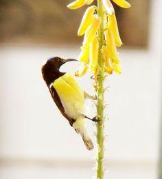 Friendly Neighbourhood Birders: Bird-Watching : From an armchair in my livingroom