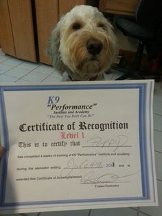 Poppy graduated from level 1 K9 Performance and Academy today!