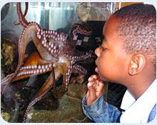 The Ocean Institute inspires our youngest learners with engaging experiences in our Ecology Learning Center.