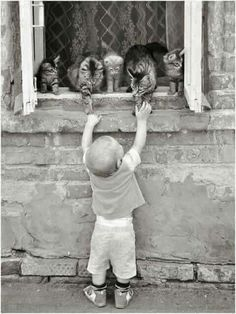 Boy and cats Animals For Kids, Animals And Pets, Baby Animals, Funny Animals, Cute Animals, Crazy Cat Lady, Crazy Cats, Cute Kids, Cute Babies