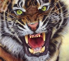 Angry Tiger - Bic Ballpoint Pen on paper. I have always loved tigers, I love felines and decided to draw my first tiger ever a year ago, this is my seco. Tiger Drawing, Tiger Art, Tiger Painting, Beautiful Cats, Animals Beautiful, Big Cats, Cats And Kittens, Art Tigre, Animals And Pets