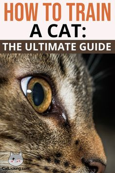 How to Train a Cat: The Ultimate Guide - CatLicking
