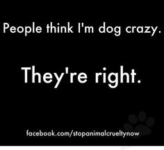 People think I'm dog crazy.