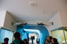 Otters meet in the hallway ottertube - January 6, 2015