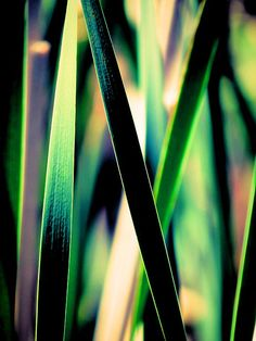 A maze of cattail fronds/leaves in abstract form.