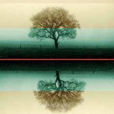 Stripey, stripey! Trees  Landscape photo  woodlands  fine art by ZenzPhotography, $18.00