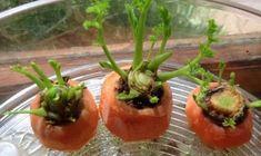 Savez-vous que certains légumes repoussent tout seuls ? Ce sont des légumes qui poussent dans l'eau ou dans la terre. Mais dans tous les cas, c'est super facile de faire son petit potager dans le jardin ou à l'intérieur. Il existe des astuces simples pour faire pousser ses propres légumes chez soi. Et ça marche qu'on habite dans une ville, dans un p'tit appartement ou une maison avec jardin !