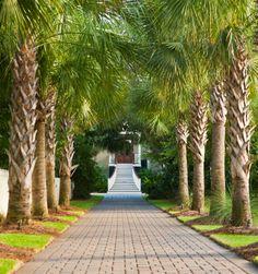 New exterior entrance ideas driveways trees 70 Ideas Sullivans Island Sc, Tropical Architecture, Isle Of Palms, Island Design, Garden Landscape Design, Tropical Garden, Backyard Landscaping, Palm Trees, House Tours