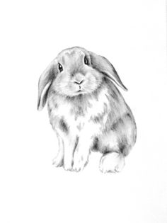 Wonderful bunny nursery sketch.