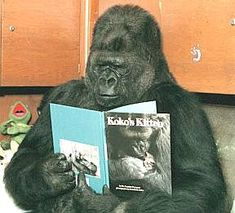 Animals Reading Books | Gorillas like a good read too, Koko looking at pictures in a book