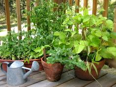 If you are planning to start a vegetable garden but don't have enough space then you can go head with container vegetables gardening. Growing vegetables in pots needs six hours of sun, potting mix … Herb Garden, Lawn And Garden, Vegetable Garden, Garden Plants, Potted Garden, Pot Plants, Plant Pots, Garden Bed, Growing Vegetables In Containers