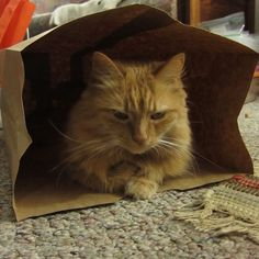 Something about those paper bags . . .