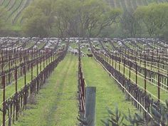 Visitors..........in the vineyard