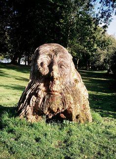 Tree Stump Face
