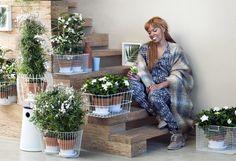 Weiße Blüten im Treppenaufgang – Pflanzenfreude.de
