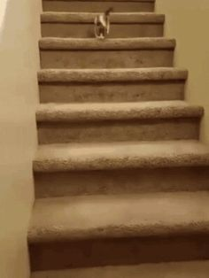 """Share this """"Cat tumbles down the stairs"""" animated gif image with everyone. is best source of Funny GIFs, Cats GIFs, Dog GIFs to Share on social networks and chat.this poor cat Funny Animal Videos, Funny Animal Pictures, Funny Animals, Animal Pics, Silly Cats, Cats And Kittens, Cute Cats, Crazy Cat Lady, Crazy Cats"""