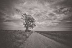 Tree on a Dirt Road | Mississippi in HDR