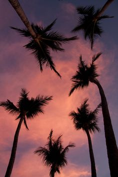 "love-england: "" Calm Palms (by Viking-) """