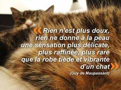 Citation chat Rien n'est plus doux, rien ne donne à la peau une sensation plus délicate, plus raffinée, plus rare que la robe tiède et vibrante d'un chat