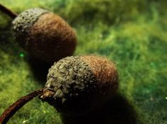"""Needle felted acorns. Details from """"Greenman"""" notebook. By Libellune. http://libellune.com/v2/2014/03/03/laine-feutree-a-laiguille-carnet-greenman/"""