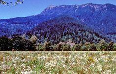 Squak Mountain - Issaquah, WA