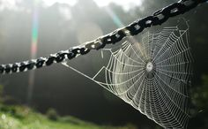 Spiderweb on a chain