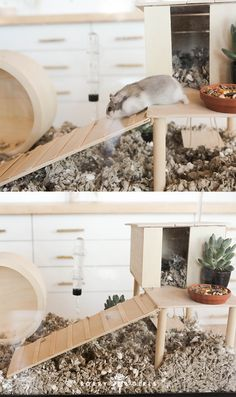 We DIYed out hamster an AWESOME new home! Click through to learn more! Dwarf Hamster Cages, Robo Dwarf Hamsters, Gerbil Toys, Gerbil Cages, Hamster Habitat, Hamster Life, Syrian Hamster, Cute Hamsters, Pets
